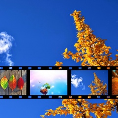 Filmstrip - Fall Tree Against Cloudy Blue Sky