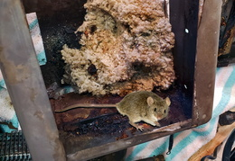 Heater Mouse Nest with Mouse Web