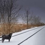 Dog on the Tracks